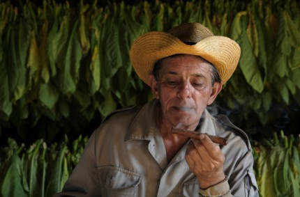 Benito sampling tobacco, Viñales