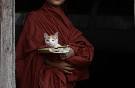 A monk's furry friend, Nyaung Shwe