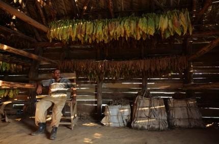 Reynel's tobacco dry house, Viñales