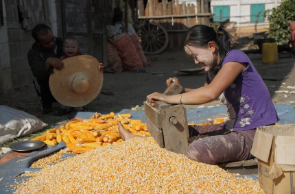 Shelling corn, Inle Lake